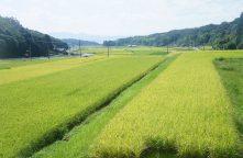 農業と食文化